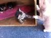 My Kitty: Thor