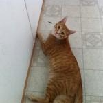 Loki Photo