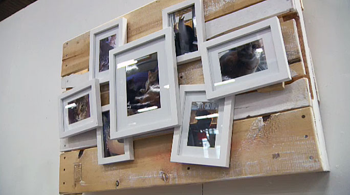 My Wooden Pallet Cat Picture Frames hung up at the Edmonton Home + Garden Show!