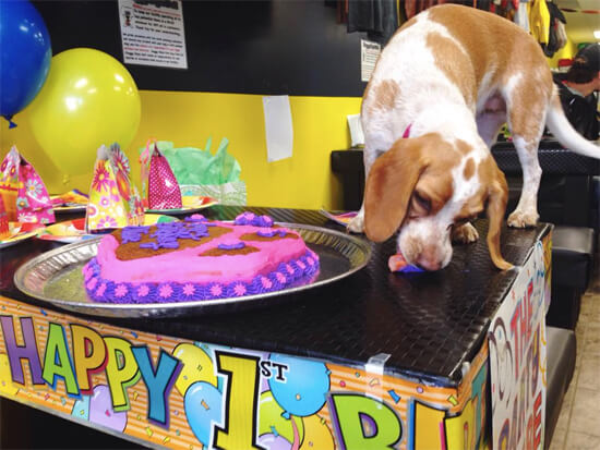 Olive eats her 'hot dog wiener candle' from the birthday cake!