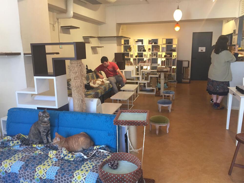 Nyafe Melange - Japan Cat Cafe Guide - Tokyo