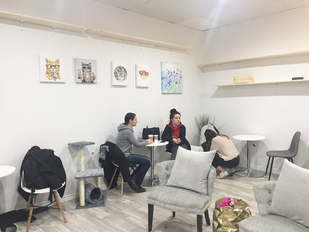 Cat Cafe on Whyte Ave Edmonton