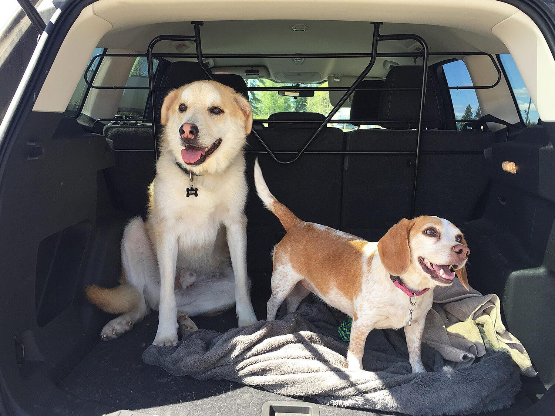 Olive Artie Dog Summer Edmonton