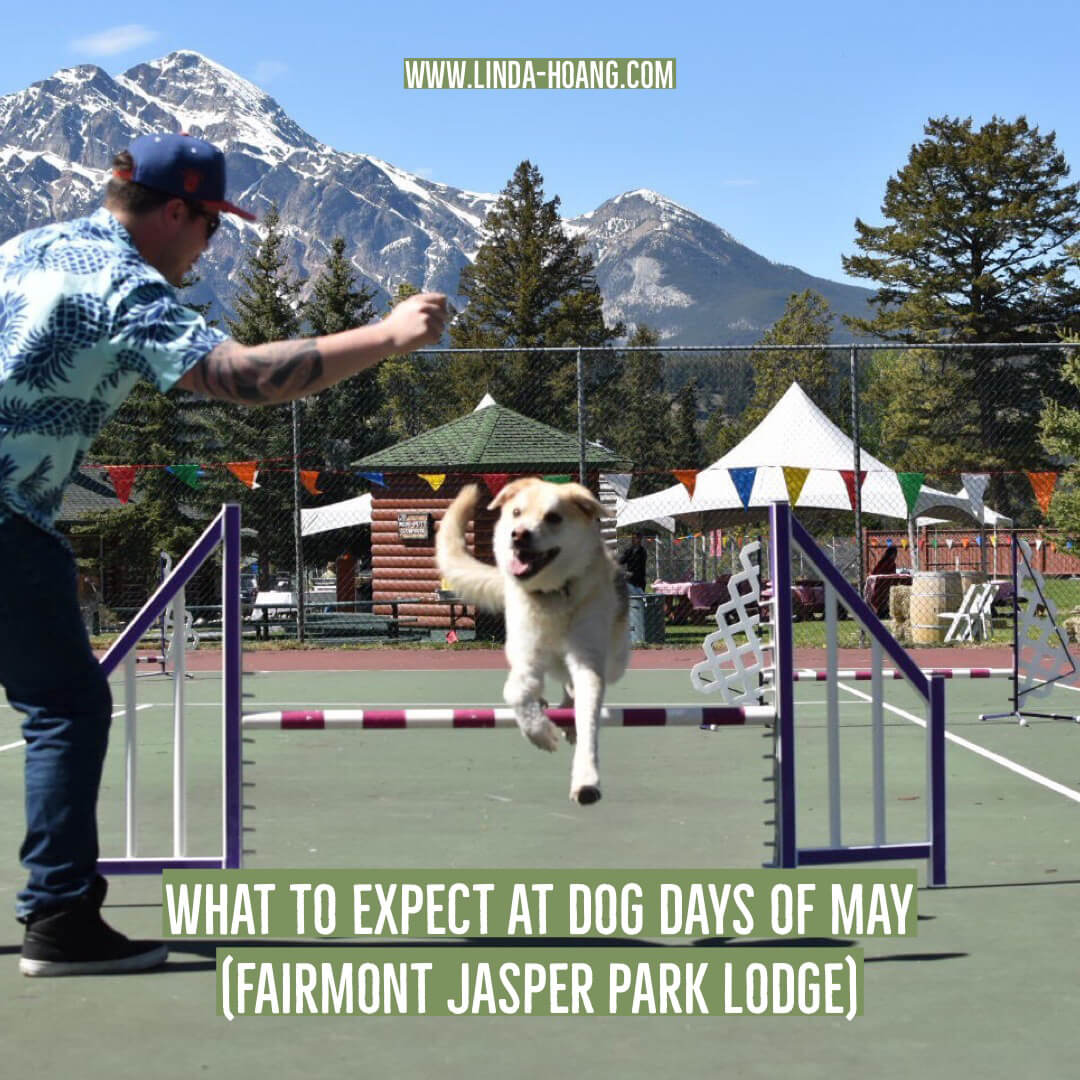 What to Expect at Dog Days of May Fairmont Jasper Park Lodge Travel Alberta