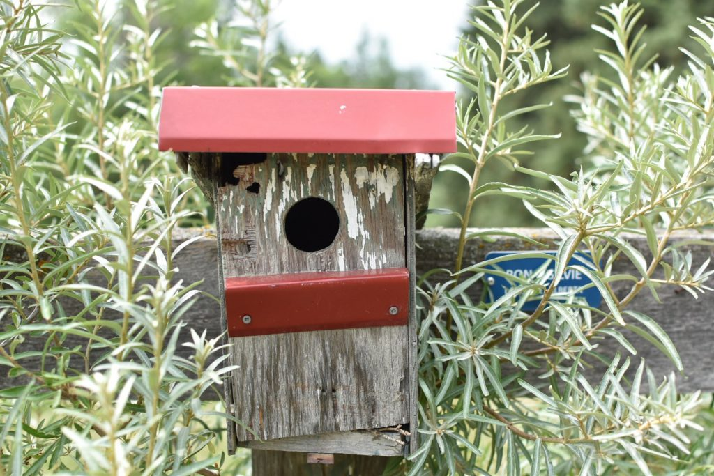 Ellis Bird Farm Bird Houses Red Deer