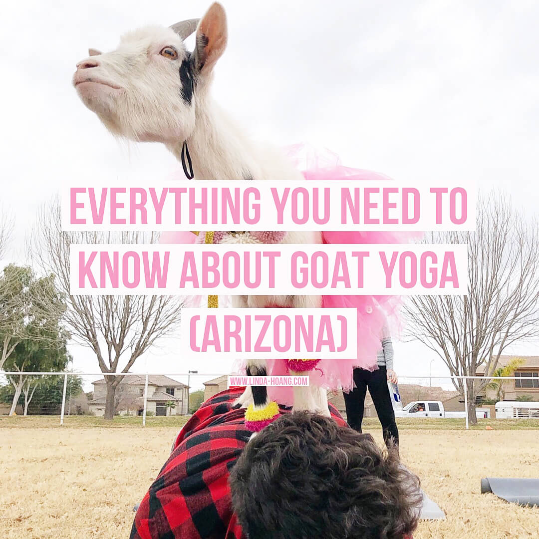 Goat Yoga Arizona - Visit Mesa Gilbert - Things To Do Travel Experiences