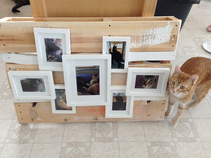 My Pallet Challenge creation: Wooden Pallet Picture Frames (with photos of Thor & Loki!)