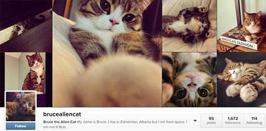 Edmonton Instagram User - brucealiencat
