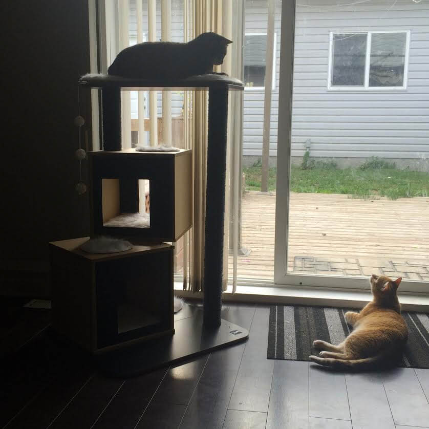 Homes Alive Pets Edmonton