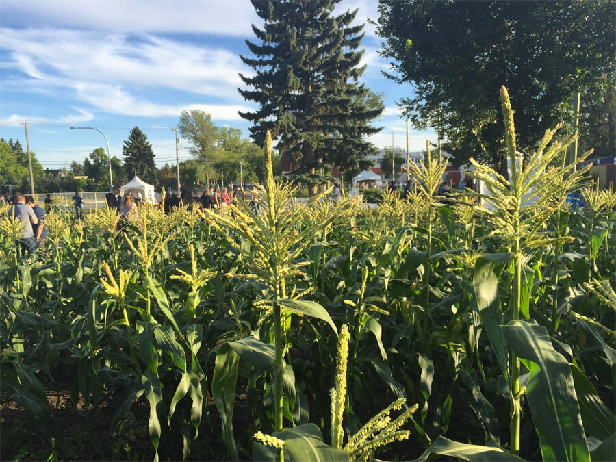 Edmonton Northlands Urban Farm - Farm Dinner - Alberta Farm Days