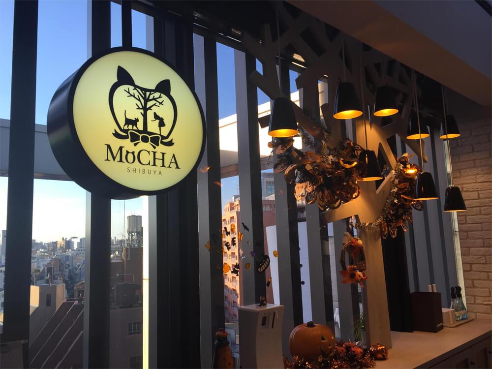 Cat Cafe Mocha - Japan Cat Cafe Guide - Tokyo