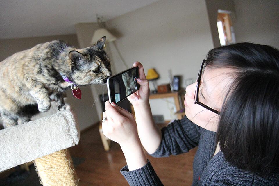 Cats of Edmonton Linda Hoang