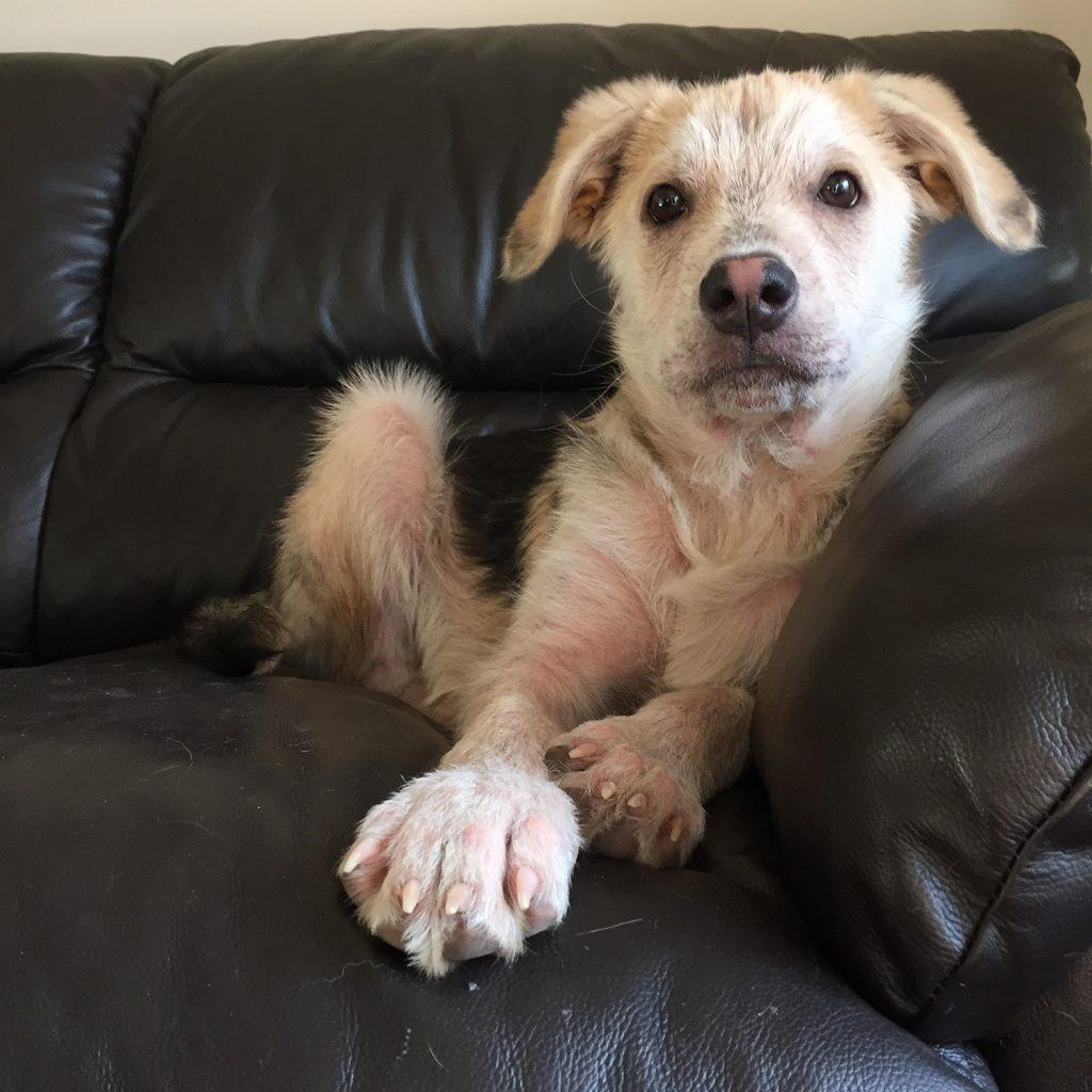 Artie Adoptable Pets Petfinder Mange