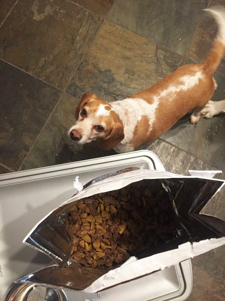Olive - National Pet Day Purina ONE Score
