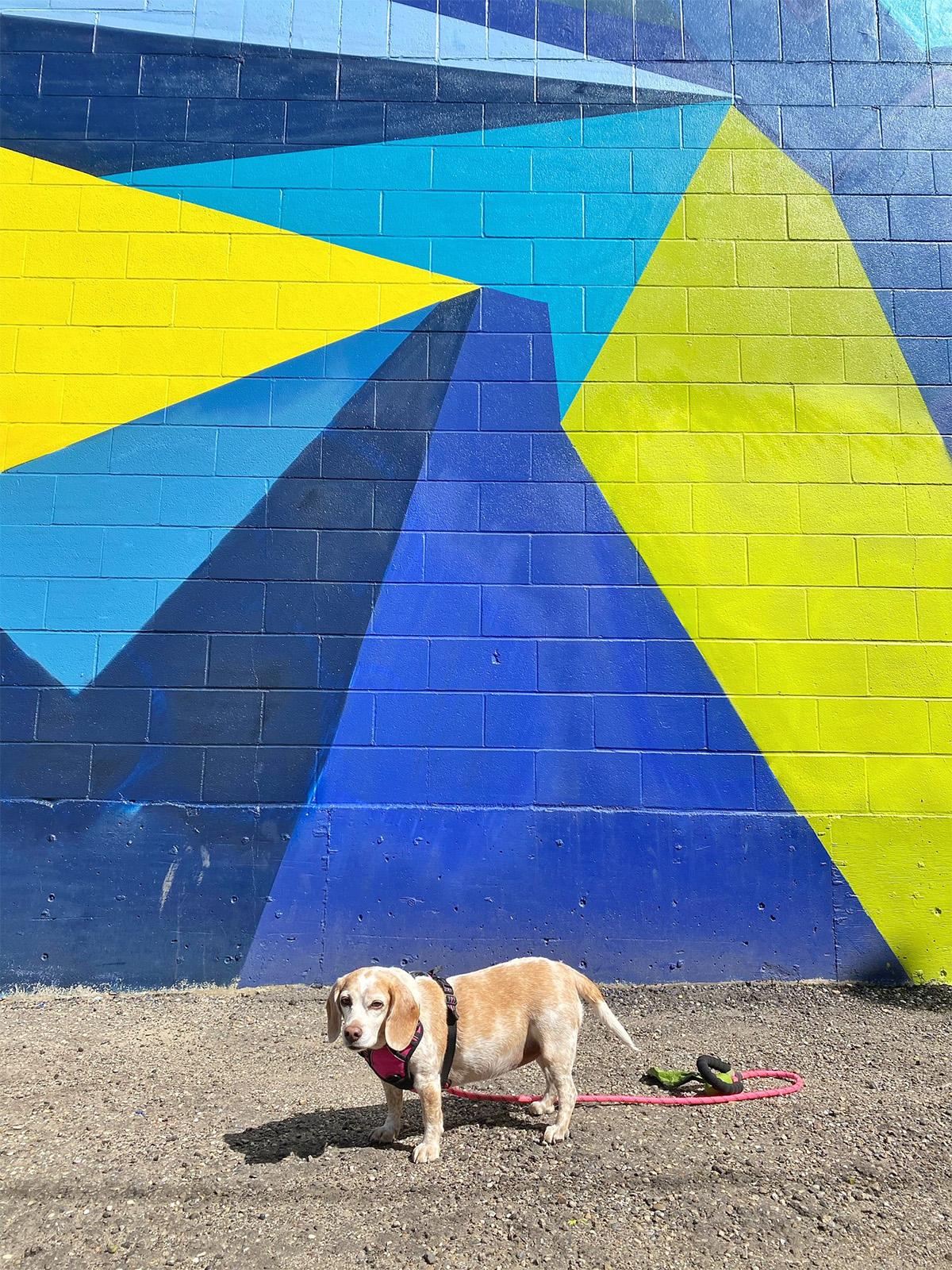 Instagrammable Walls of Edmonton - Explore Edmonton - Murals - Walls - Whyte Ave Old Strathcona - Wane Cod