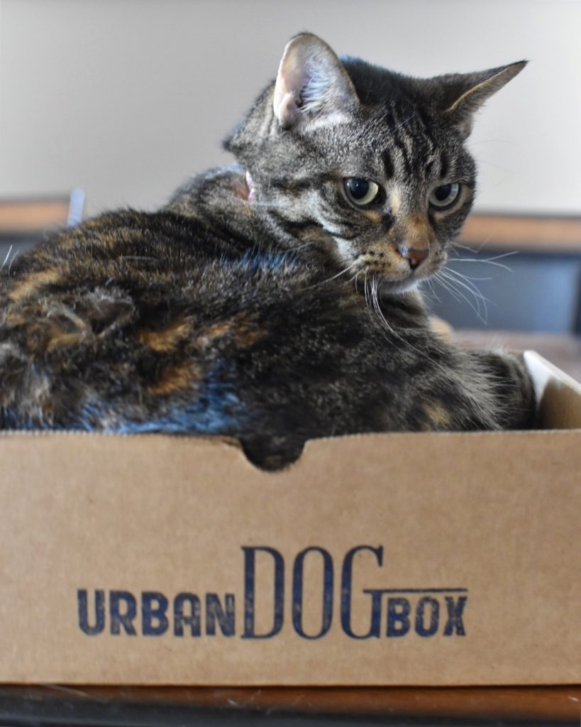 Urban Dog Box - Edmonton - Canada - Monthly Subscription Service