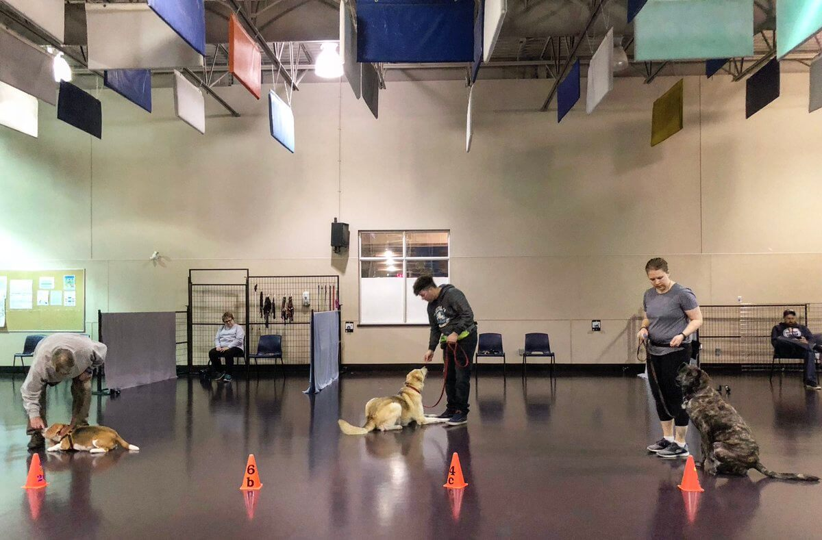 Edmonton Humane Society Leash Reactivity Dog Training Group Classes