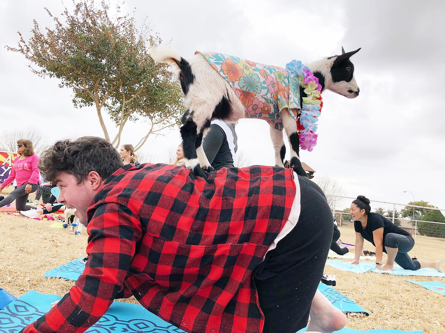 Goat Yoga Arizona Visit Mesa Gilbert Things To Do Travel Unique Experiences