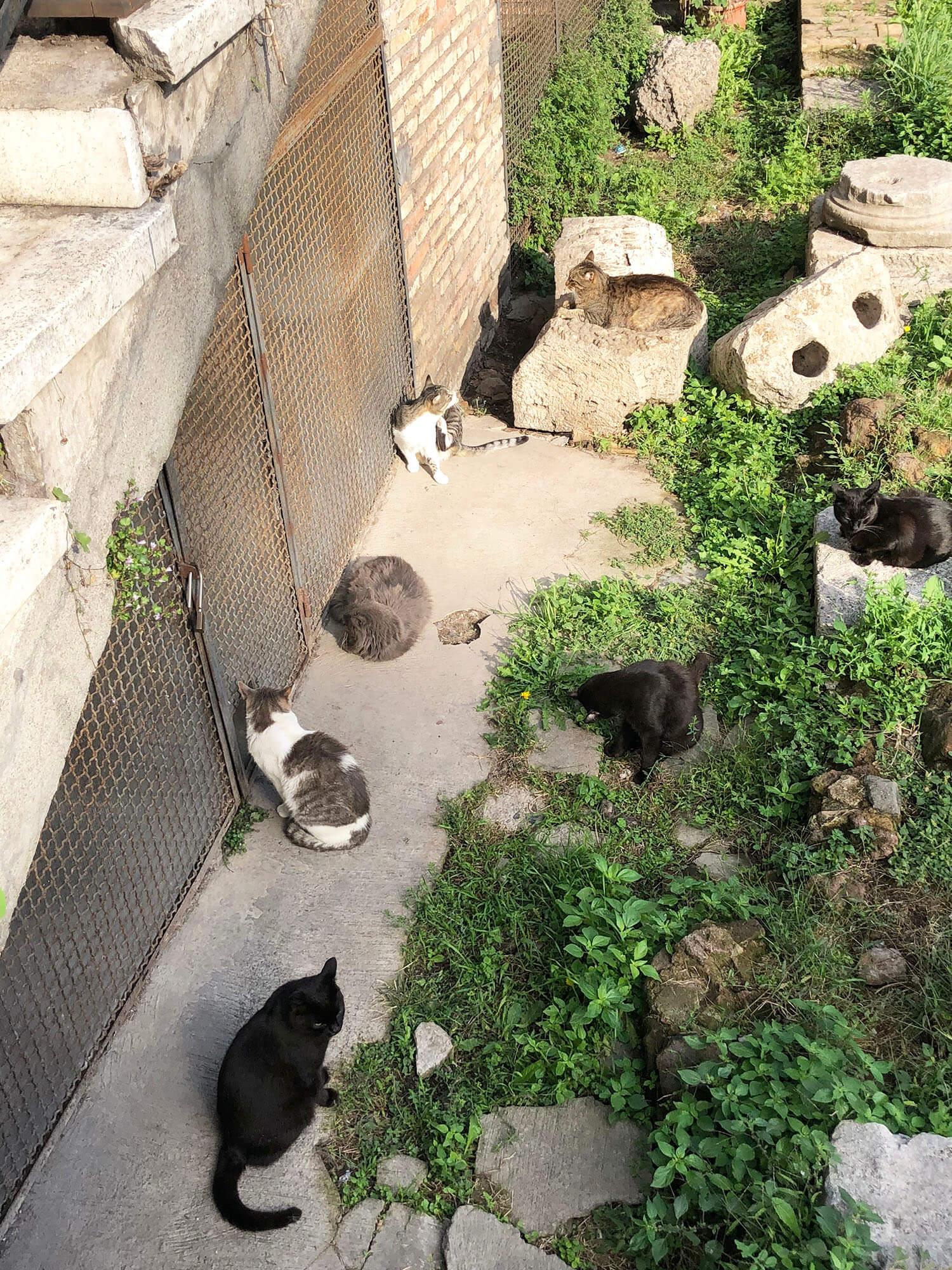 Torre Argentina Cat Sanctuary - Explore Rome - Travel Italy