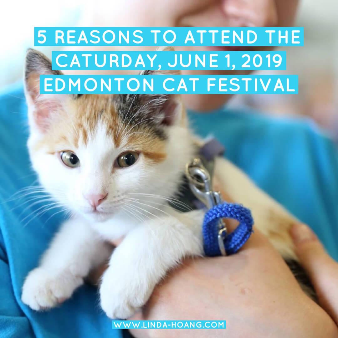 Edmonton Cat Festival Reasons to Go
