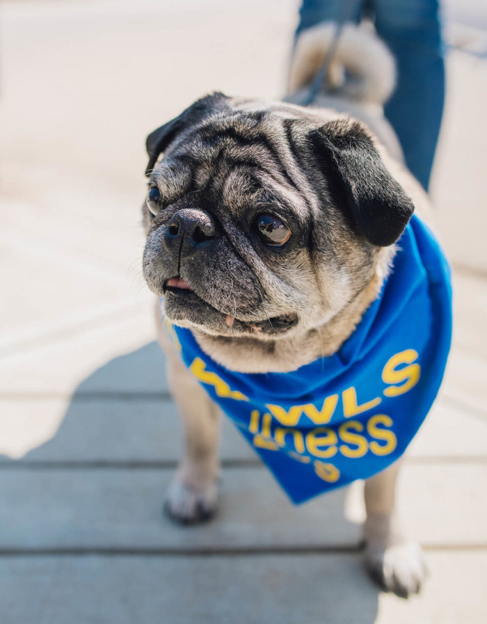 CAAWLS Dogs - Keswick Landing - Edmonton