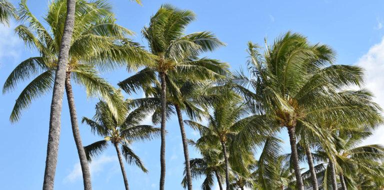 Maui Hawaii Travel Guide Tips