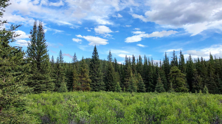 West Country Explore Alberta Town of Sundre Travel Guide