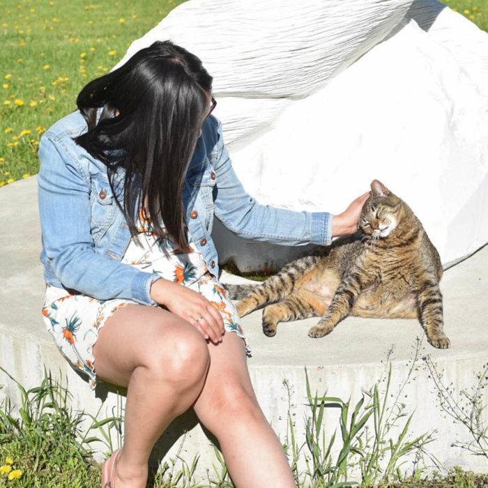 Travel Guide - Sundre Explore Alberta - Bergen International Sculpture Park Cat