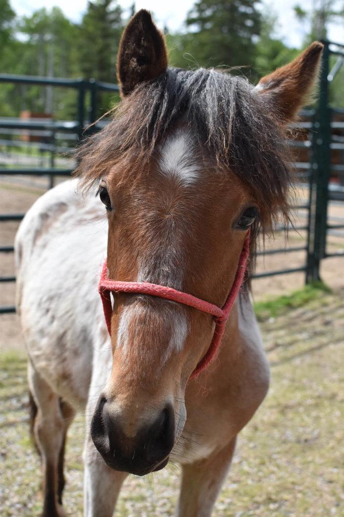 Travel Guide - Sundre Explore Alberta - Wild Horses of Alberta Society