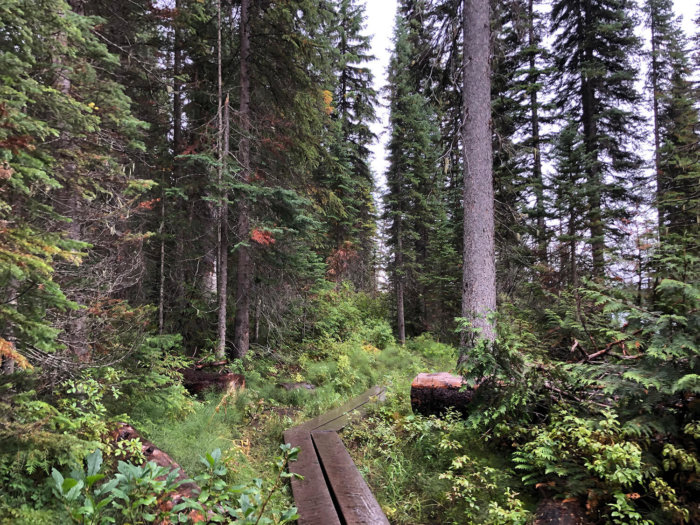 Emerald Lake Trail Loop Hike - Yoho National Park - Explore BC - Explore Alberta Field