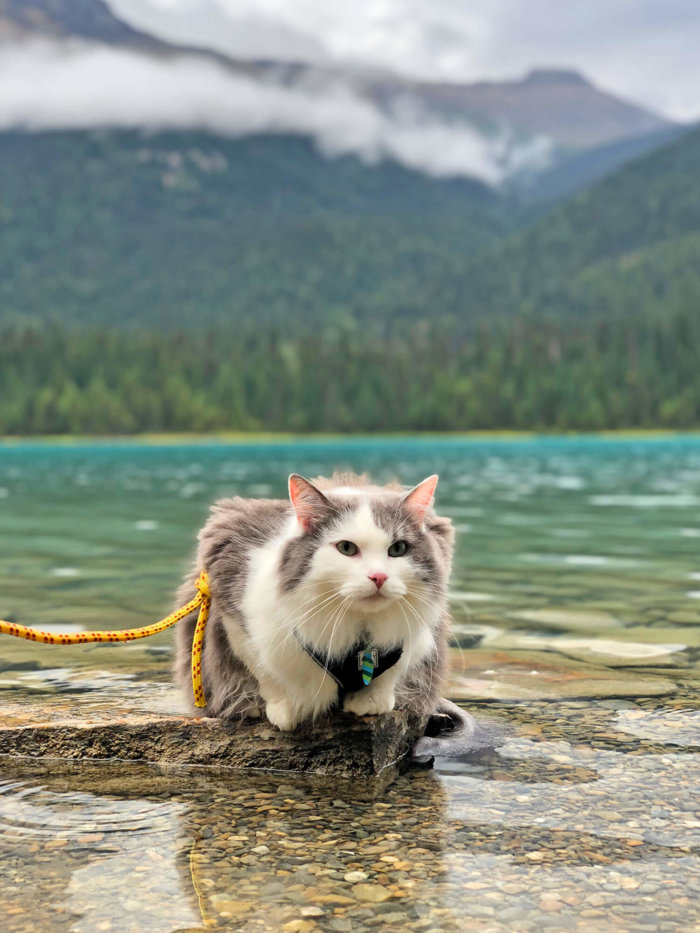 Gary the Adventure Cat - Emerald Lake - Yoho National Park - Explore BC - Explore Alberta Field