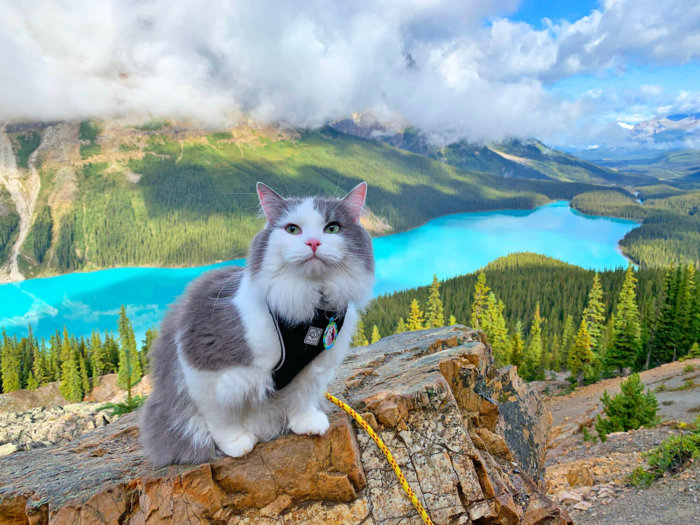 Peyto Lake - Gary the Adventure Cat - Explore Alberta - Travel - Parks Canada - Banff National Park