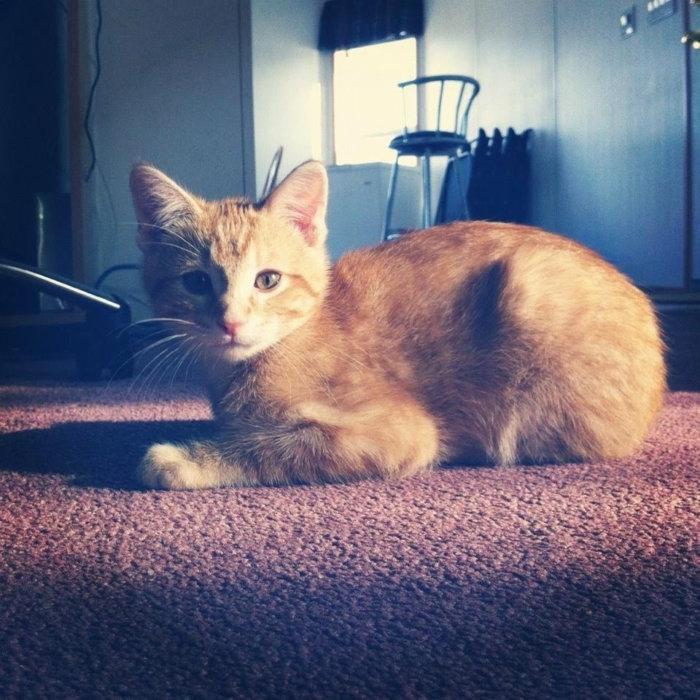 Loki as a Kitty 2012