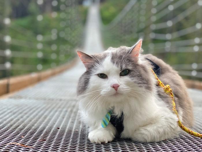 Blackshale Suspension Bridge - Kananaskis Country - Canmore - Explore Alberta - Travel Guide - Hiking - Trails - Great Grams of Gary - Adventure Cat