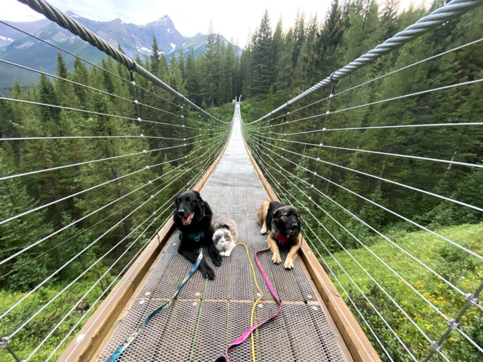 Blackshale Suspension Bridge - Kananaskis Country - Canmore - Explore Alberta - Travel Guide - Hiking - Trails - Adventure Dog and Cat