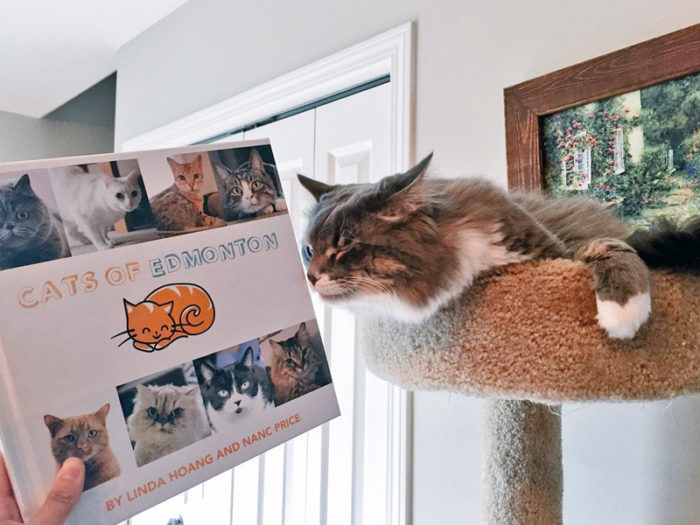 Cats of Edmonton Book - Explore Edmonton - Made in Edmonton - Ultimate Gift Guide Linda Hoang