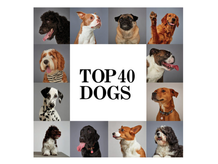 Top 40 Dogs of Edmonton - Explore Edmonton - Made in Edmonton - Ultimate Gift Guide Linda Hoang