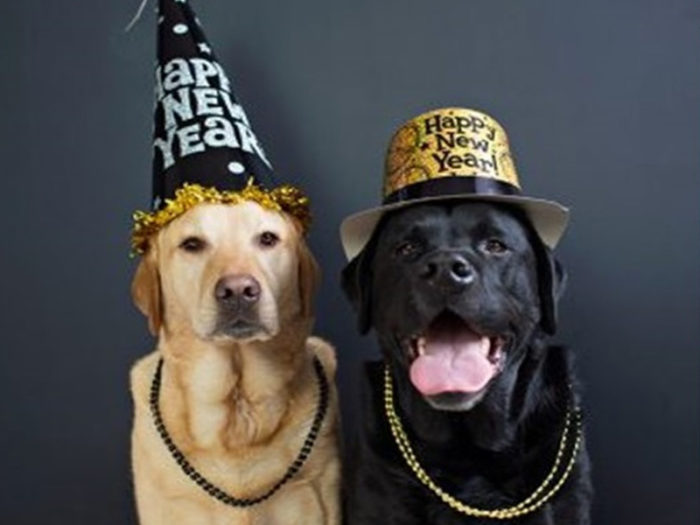New Years Eve Explore Edmonton Dec 31 2020 Virtual Events Take Out Meals Things To Do - Second Chance Animal Rescue Virtual Bingo Fundraiser SCARS