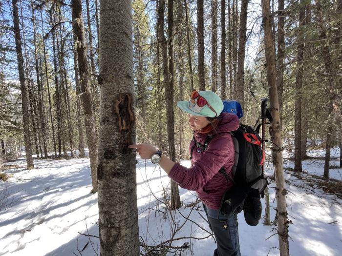 Explore Canmore Kananaskis - Travel Alberta - Pomeroy Kananaskis Lodge Kananaskis Outfitters Guided Survival Hike 5