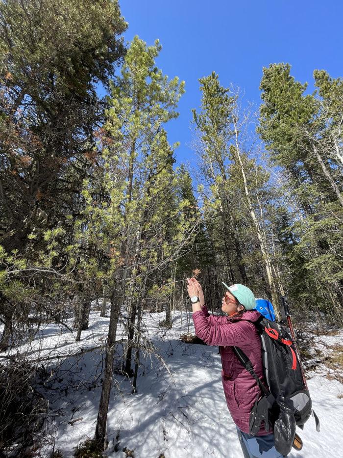 Explore Canmore Kananaskis - Travel Alberta - Pomeroy Kananaskis Lodge Kananaskis Outfitters Guided Survival Hike