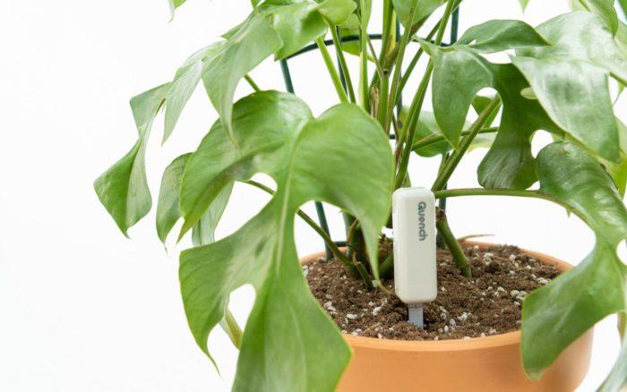 quench plant edmonton