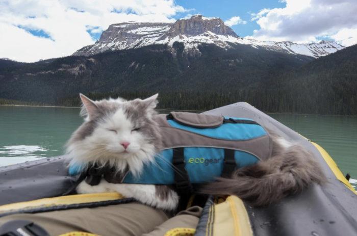 Alberta Adventure Cat Great Grams of Gary - Explore Alberta - 1