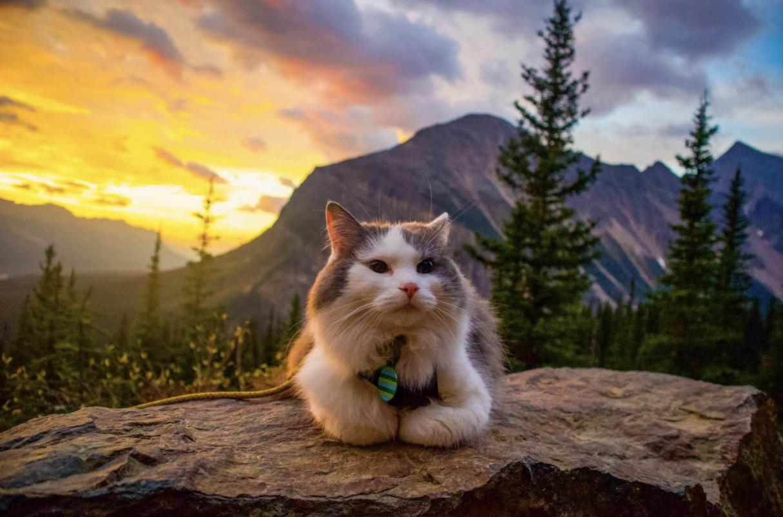 Alberta Adventure Cat Great Grams of Gary - Explore Alberta - 2
