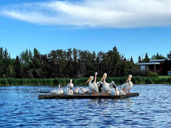 Floating Kayaking Water Activities on the North Saskatchewan River Edmonton - Explore Edmonton - Travel Alberta - Bask on the Sask 10