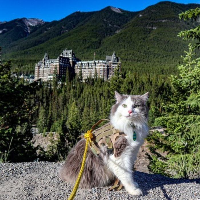 Instagrammable Fairmont Banff Springs Resort Hotel - Photo Spots - Explore Alberta - 26 - Great Grams of Gary Adventure Cat