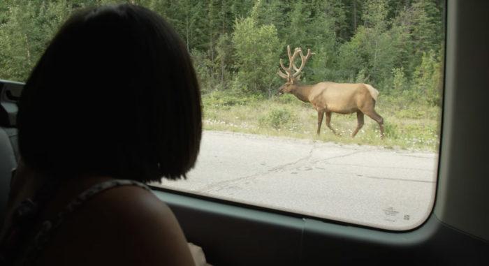 Explore Alberta - Travel Alberta - Wildlife - Jasper National Park - Jasper Tour Company 5