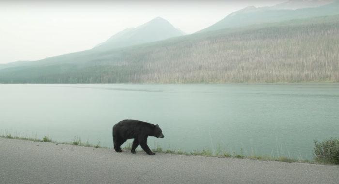Explore Alberta - Travel Alberta - Wildlife - Jasper National Park - Jasper Tour Company