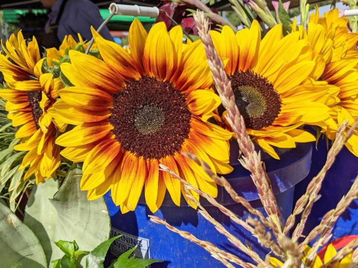 Explore Camrose - Go East of Edmonton - City of Camrose - Explore Alberta - Travel - Day Trip - Outdoor Farmers Market Camrose